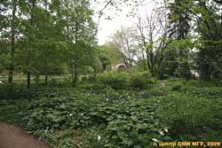 Филиал Ботанического сада на пр.Мира